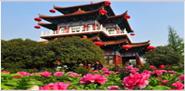 神州牡丹园、王城公园(含动物园)